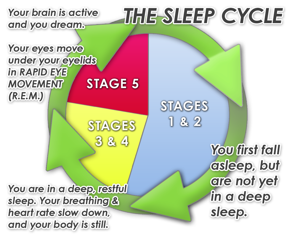 understanding your sleep cycles trainers box cb